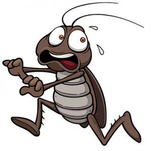 cockroach_